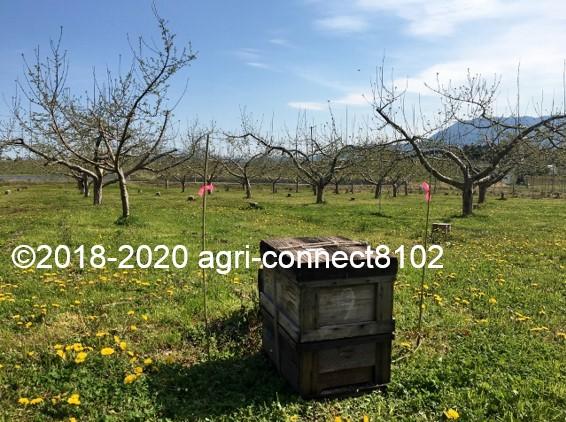 f:id:agri-connect:20200428230754j:plain