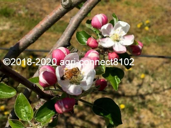 f:id:agri-connect:20200428231247j:plain