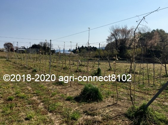 f:id:agri-connect:20200429224438j:plain