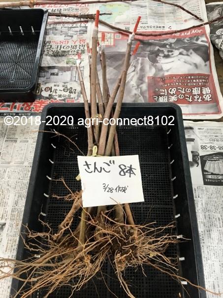 f:id:agri-connect:20200505214317j:plain