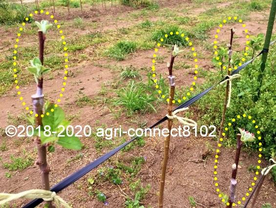 f:id:agri-connect:20200506111116j:plain