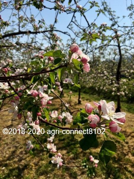 f:id:agri-connect:20200508211245j:plain