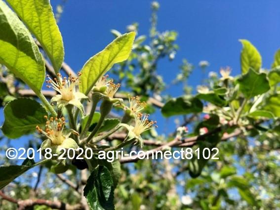 f:id:agri-connect:20200508211301j:plain