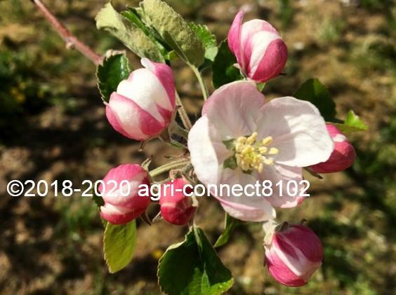 f:id:agri-connect:20200508211734j:plain