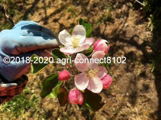 f:id:agri-connect:20200508211750j:plain