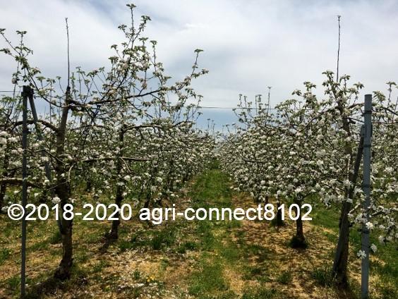 f:id:agri-connect:20200508213032j:plain