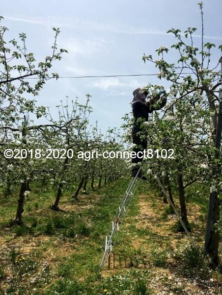f:id:agri-connect:20200508213243j:plain