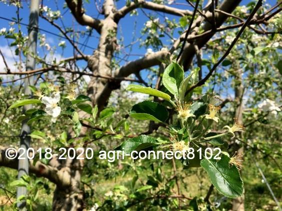 f:id:agri-connect:20200508213601j:plain