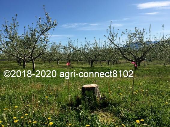 f:id:agri-connect:20200508213849j:plain