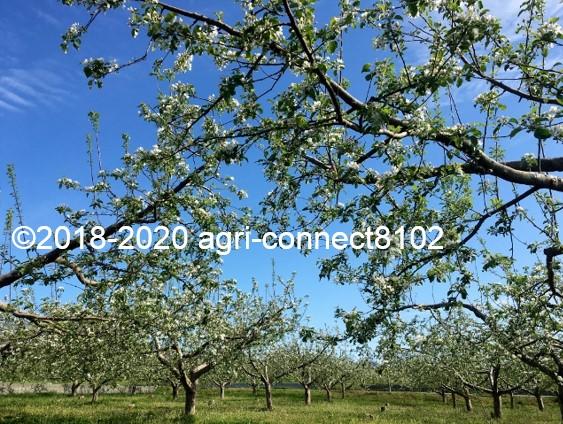 f:id:agri-connect:20200508214152j:plain