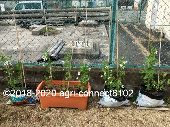 f:id:agri-connect:20200512213709j:plain