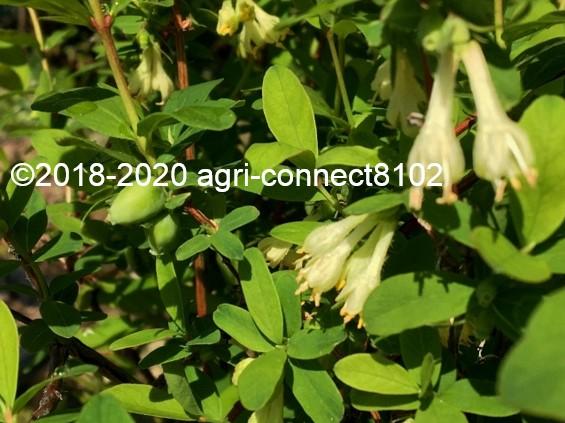 f:id:agri-connect:20200515213727j:plain