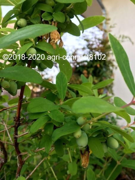 f:id:agri-connect:20200515213829j:plain