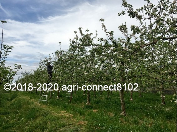 f:id:agri-connect:20200517211500j:plain