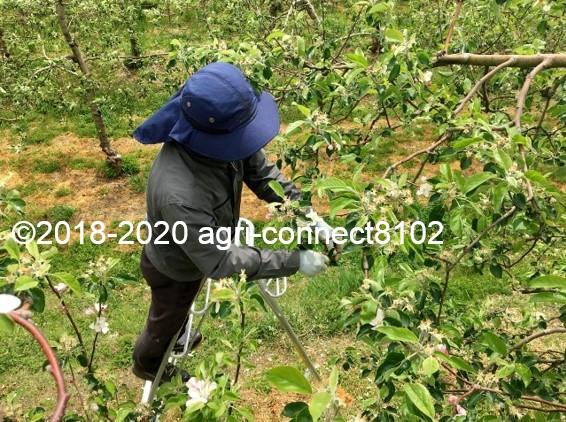 f:id:agri-connect:20200517211717j:plain