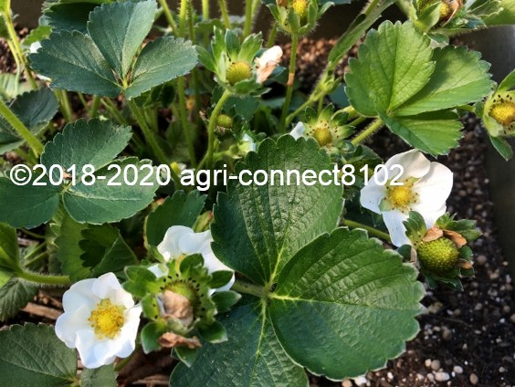 f:id:agri-connect:20200522220847j:plain