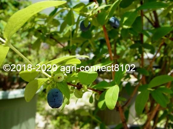 f:id:agri-connect:20200525204623j:plain