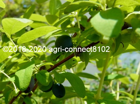 f:id:agri-connect:20200525204628j:plain