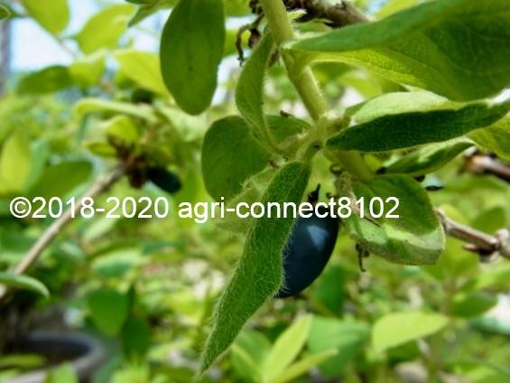 f:id:agri-connect:20200525204632j:plain