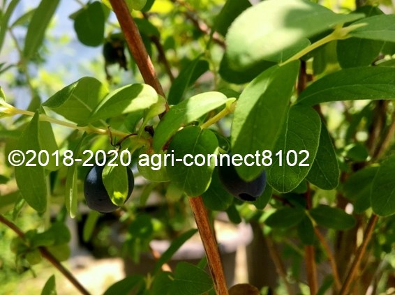 f:id:agri-connect:20200525211322j:plain