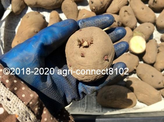 f:id:agri-connect:20200526231634j:plain