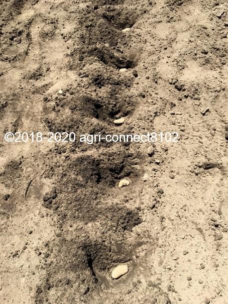 f:id:agri-connect:20200526232006j:plain