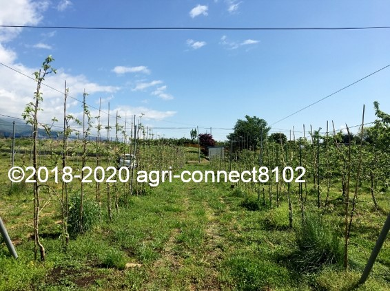 f:id:agri-connect:20200529213413j:plain