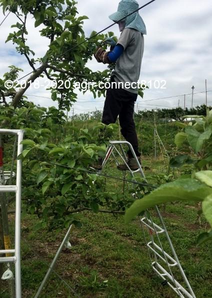 f:id:agri-connect:20200530215115j:plain