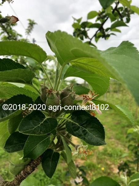 f:id:agri-connect:20200530215138j:plain