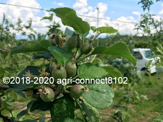 f:id:agri-connect:20200530220729j:plain