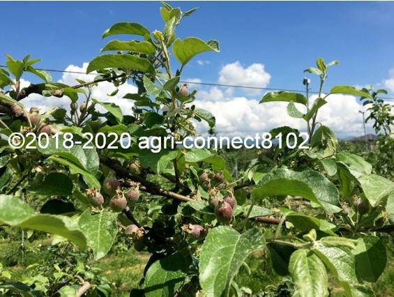 f:id:agri-connect:20200530220735j:plain