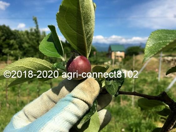 f:id:agri-connect:20200530220847j:plain