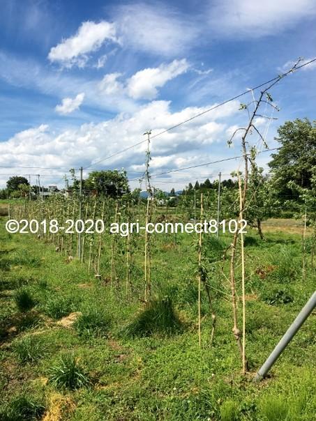 f:id:agri-connect:20200530220853j:plain