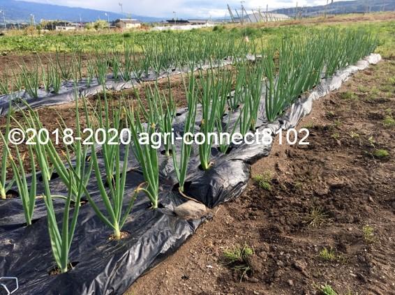 f:id:agri-connect:20200601225040j:plain