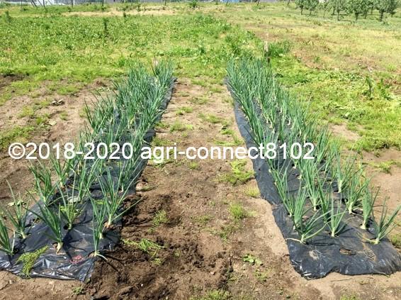 f:id:agri-connect:20200601225044j:plain