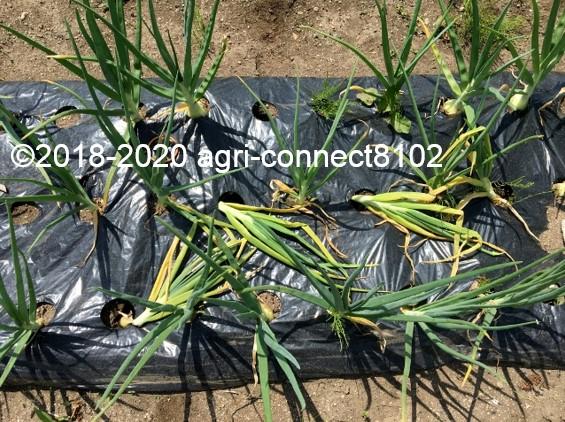 f:id:agri-connect:20200601225320j:plain