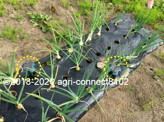f:id:agri-connect:20200601230018j:plain