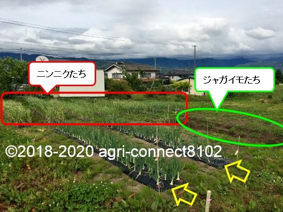 f:id:agri-connect:20200601230147j:plain