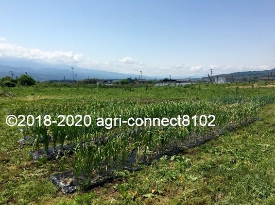 f:id:agri-connect:20200603204058j:plain