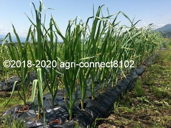 f:id:agri-connect:20200603204116j:plain
