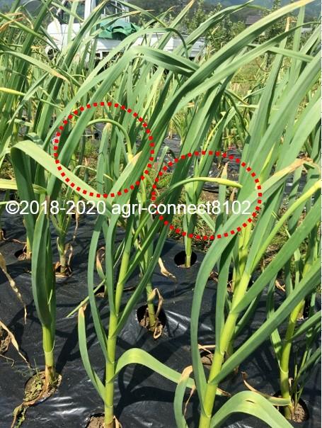 f:id:agri-connect:20200603204126j:plain