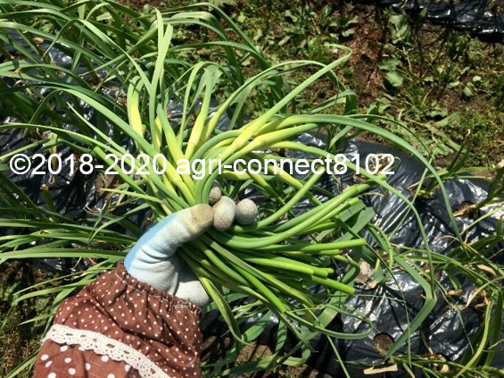 f:id:agri-connect:20200603204131j:plain