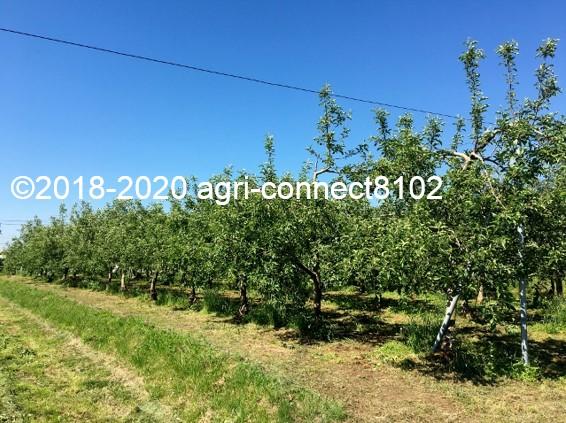 f:id:agri-connect:20200603231337j:plain