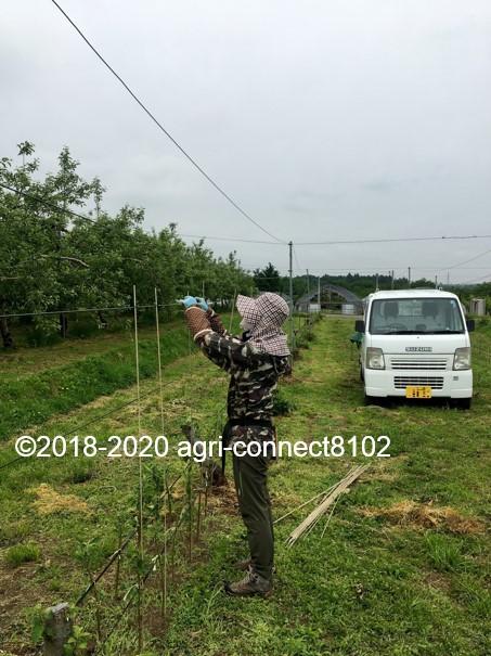 f:id:agri-connect:20200604223340j:plain
