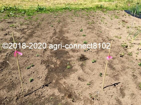 f:id:agri-connect:20200605230108j:plain