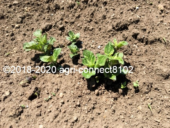 f:id:agri-connect:20200605230118j:plain