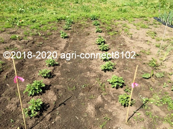 f:id:agri-connect:20200605230447j:plain