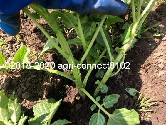 f:id:agri-connect:20200605230501j:plain