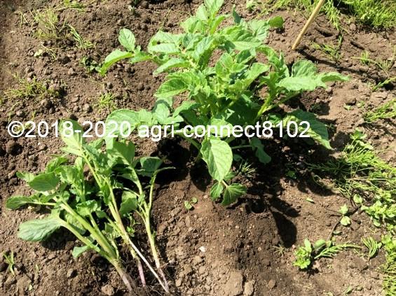 f:id:agri-connect:20200605230507j:plain