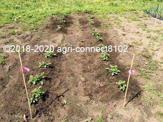 f:id:agri-connect:20200605230512j:plain